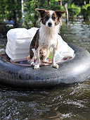 A Pet Dog Ferried to Safety on a Flooded Section of Road after a River Burst its Banks in Bangkok During the November 2011 Floods
