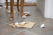 Dog standing in hallway over chewed mail, low section