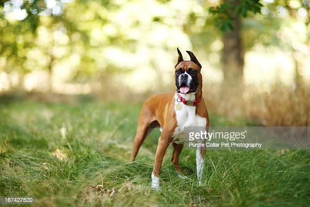 Dog Standing in Tall Grass
