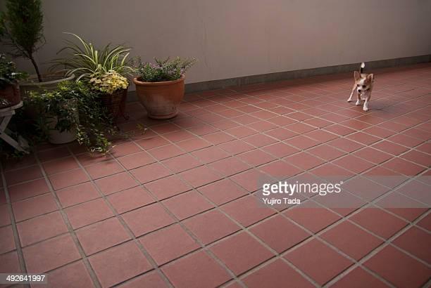 Dog standing on floor