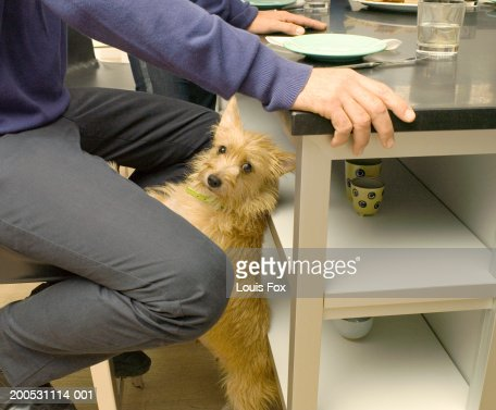 Dog standing on hind legs resting paws on man's chair in kitchen : Stock Photo