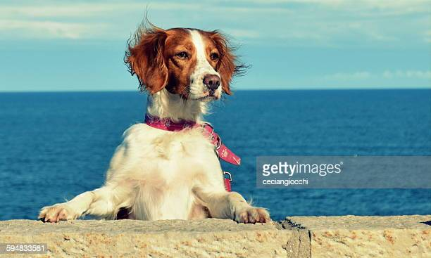 Dog standing on hind legs with paws on a wall