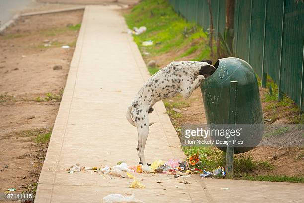A Dog Standing On Its Hind Legs With Its Head In The Garbage Receptacle With Garbage All Over The Sidewalk