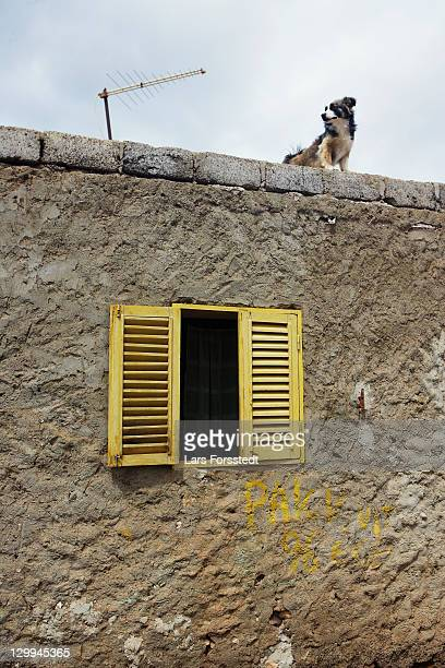 Dog standing on roof of stone house