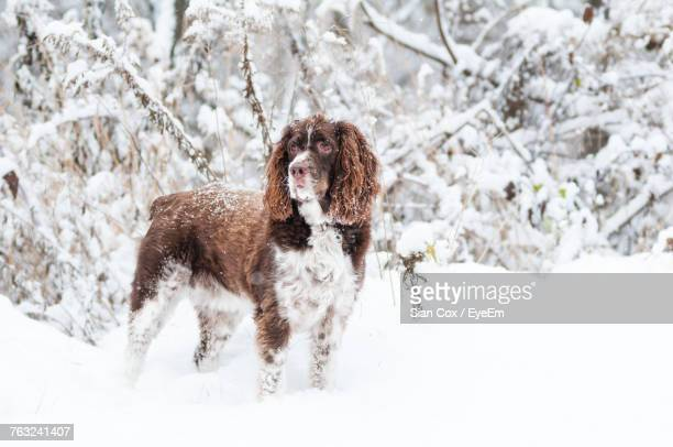 Dog Standing On Snow Field During Winter