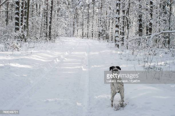 Dog Standing On Snowy Field Amidst Trees At Forest
