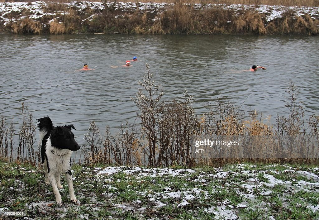 A dog stands at the river Thaya near the border to Austria near Breclav, Czech Republic on December 15, 2012. Winter swimmers celebrated the entry of the Czech Republic to the Schengen area on December 21, 2007 and commemorated the victims shot by soldiers in crossing the border to Austria under communism.