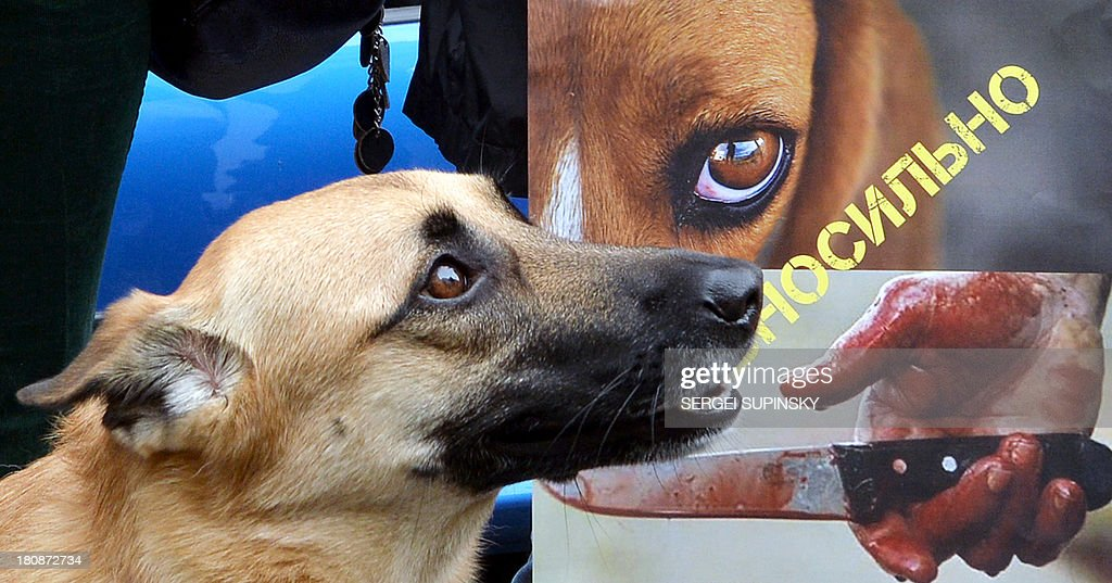 A dog stands by its owner holding a placard reading 'Your indifference is complicit in the killings !' during an animal rights activists' rally held outside the Ministry of Interior in Kiev on September 17, 2013. The protesters demand an end to the culling of stray animals.