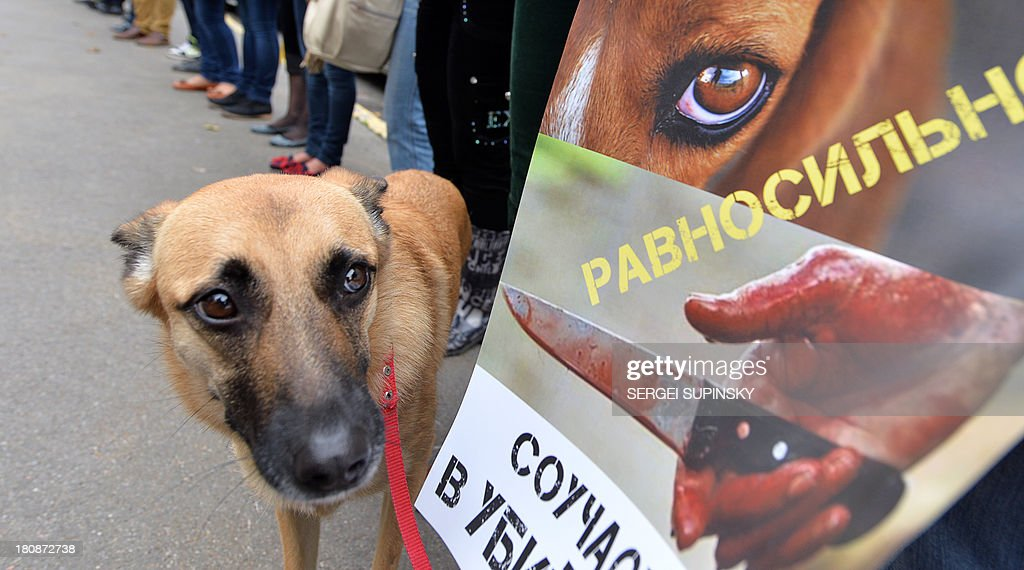 A dog stands by its owner holding a placard reading 'Your indifference is complicit in the killings !' during an animal rights activists' rally held outside the Ministry of Interior in Kiev on September 17, 2013. The protesters demand an end to the culling of stray animals. AFP PHOTO / SERGEI SUPINSKY