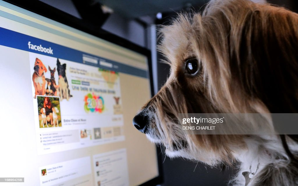 TOUSSAINT - A dog stands in front of a computer screen with a facebook page opened on it, on January 4, 2013 in Lille, Northern France. AFP PHOTO / DENIS CHARLET