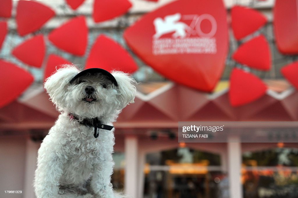A dog stands in front of the red carpet before the screening of 'Es-Touh' (Les Terrasses) presented in competition at the 70th Venice Film Festival on September 6, 2013 at Venice Lido.
