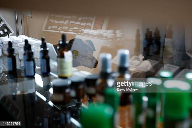 A dog stands near a display case of topical products made from marijuana at Perennial Holistic Wellness Center medical marijuana dispensary which...
