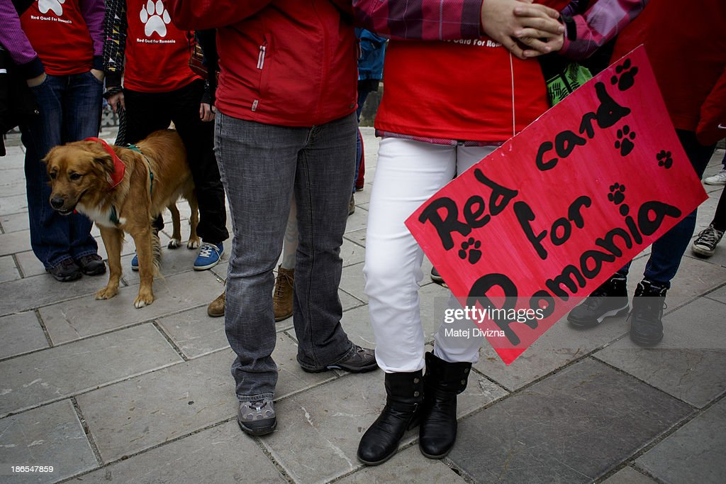 A dog stands next to participants with a banner displaying 'Red Card For Romania' during an animal rights activists' protest in the All Saints' Day on November 1, 2013 in Prague, Czech Republic. Activists were protesting against the Romania law for stray dog culling approved by Romania's constitutional court in September this year. According to estimates 65,000 stray dogs live on the streets of Bucharest.