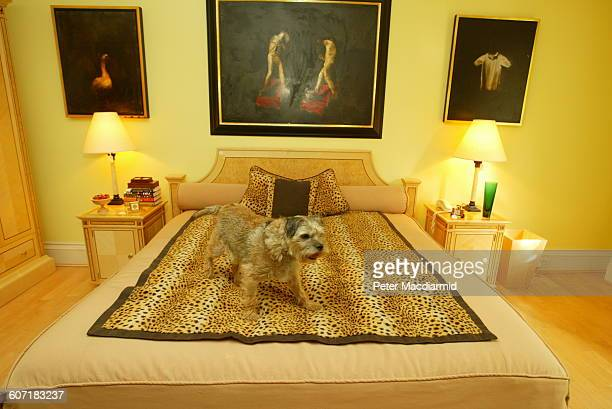 A dog stands on a bed in Elton John's home London England September 12 2003 In the background are several items tagged by Sotheby's for an auction
