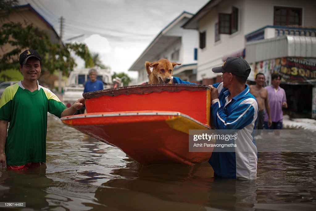 A dog stands on a boat as floods continue to hit Pathum Thani province on October 14, 2011 in Pathum Thani, north of Bangkok,Thailand. Crews of public workers, soldiers and volunteers are evacuating residents from flooded areas north of Bangkok as efforts continue to protect the capital from increased rainfall and rising tides during the worst floods to hit the country for decades.