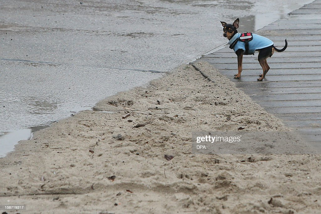 A dog stands on the Baltic Sea beach of Travemuende, northern Germany on December 25, 2012.