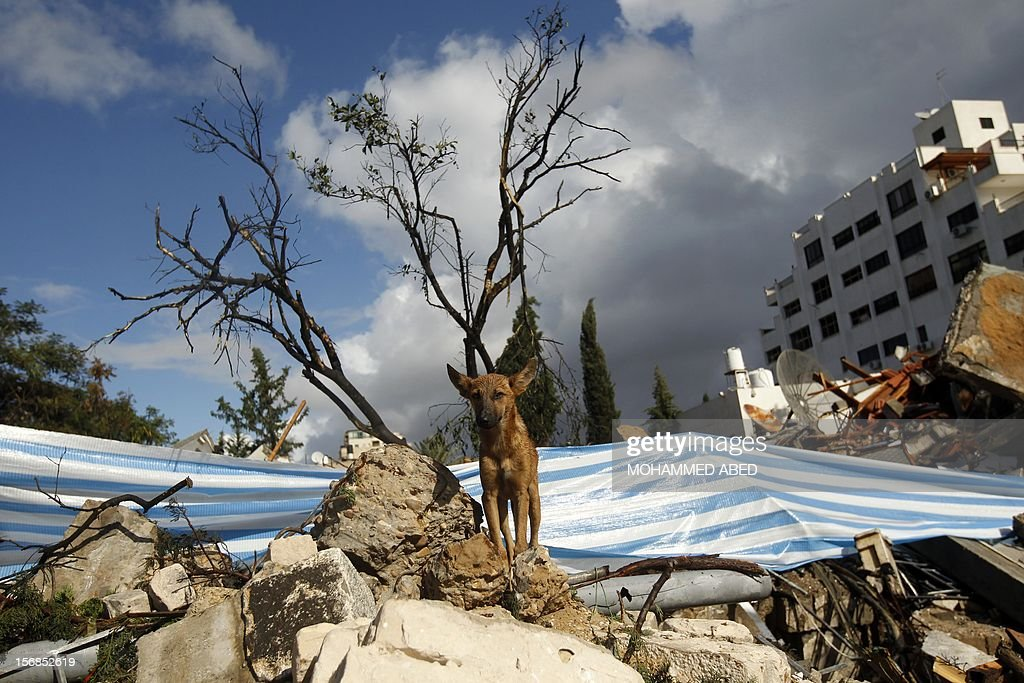 A dog stands on the rubble of a destroyed house in Gaza City on November 23, 2012. Israeli politicians returned to the campaign trail as the streets of Gaza came back to life after a truce ended eight days of bloodshed, with both sides claiming victory while remaining wary. AFP PHOTO/MOHAMMED ABED