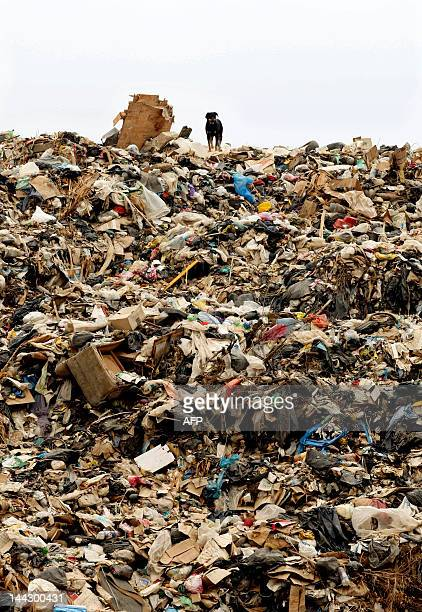 A dog stands on top of Lebanon's second largest rubbish dump in the southern Lebanese city of Sidon on May 13 2012 as Greenpeace activists took part...