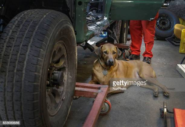 Dog stay at rebuilding vehicle side at mohenic garage in Paju South Korea A 20yearold beat up Hyundai SUV isn't anyone's idea of a dream car But used...