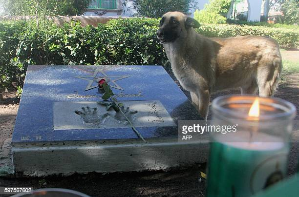A dog stays next to a plaque with a star inside the house of Mexican singer Juan Gabriel in Ciudad Juarez Mexico on August 28 2016 Mexican singer...
