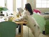 Hund stehlen woman's toast
