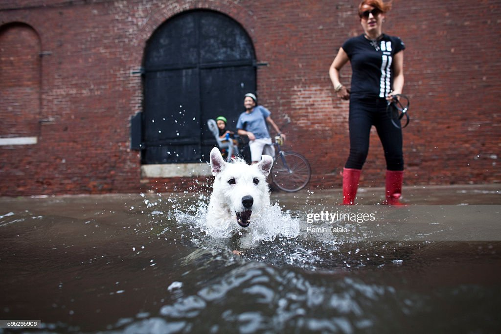 A dog swims through a flooded street in Red Hook section of Brooklyn after hurricane Irene made landfall in New York City on Sunday August 28 2011...