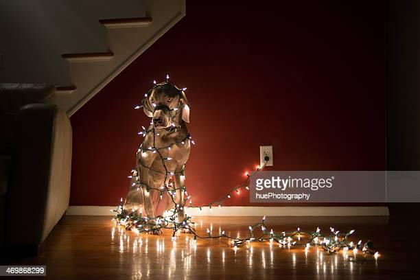 犬もつれるのクリスマスライト