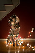 Dog Tangled in Christmas Lights