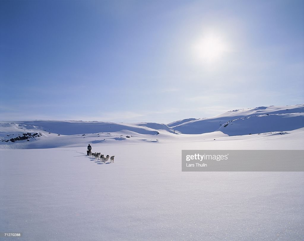 A dog team in a winter landscape.