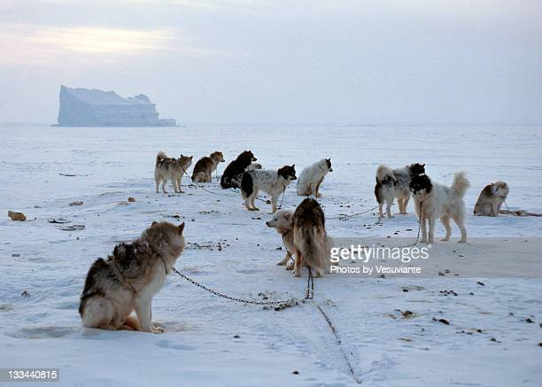 Dog team races of Pond Inlet
