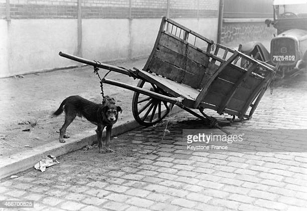Dog tied to a handcart in November 1929 in Paris France