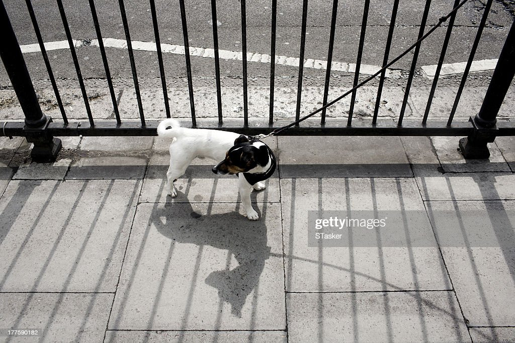 Dog tied to gate : Stock Photo