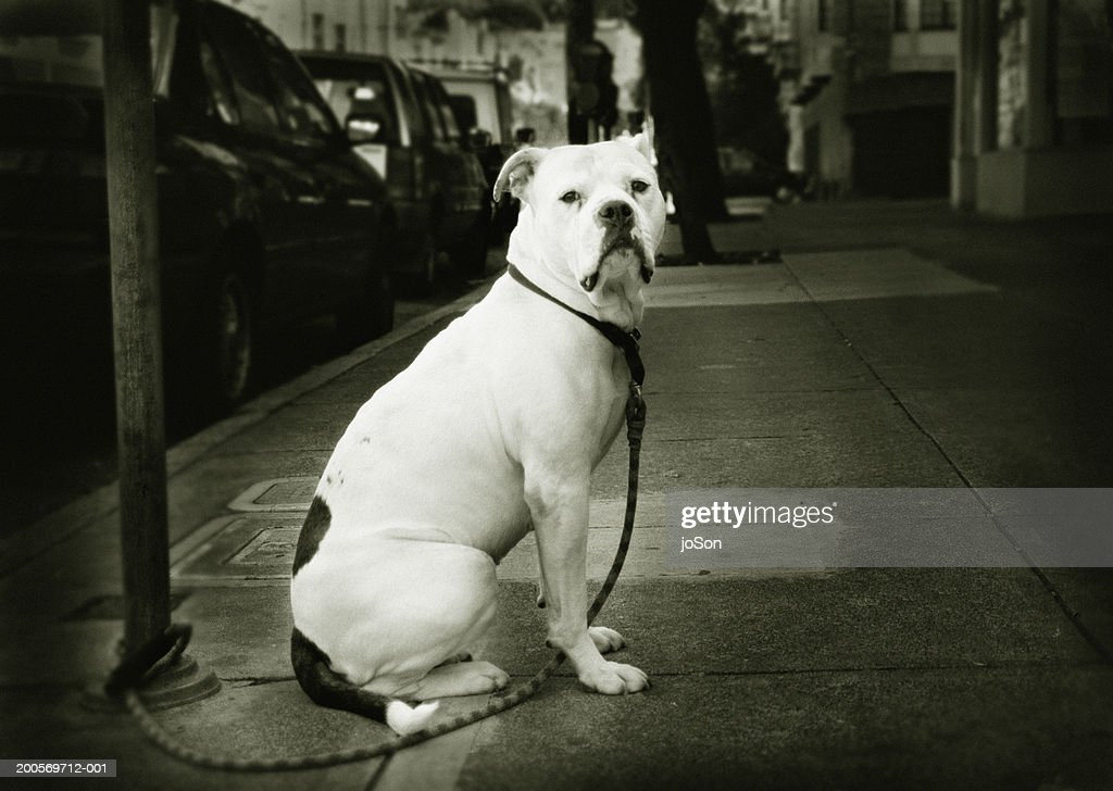 Dog tied to pole on street : Stock Photo