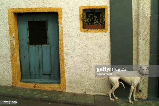 Hund mit den Wand.
