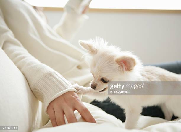 Dog touching Japanese woman's hand on bed