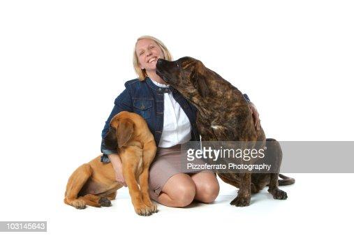 Dog trainer with English Mastiff dogs