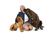 Dog trainer with English Mastiff dogs