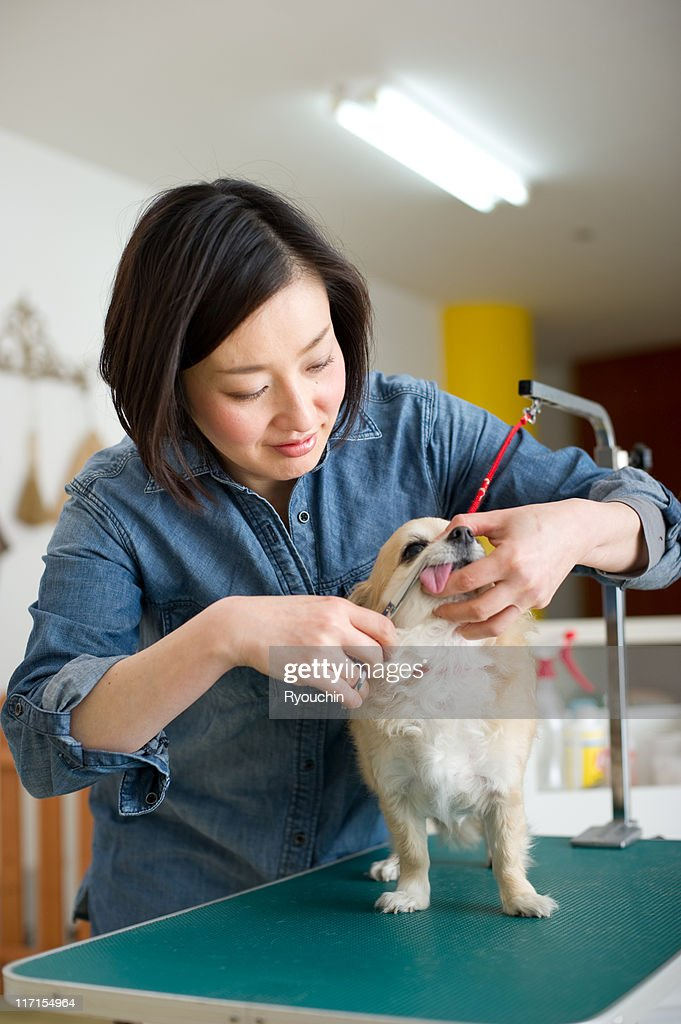 dog trimmer,dog beautician,lovely guest : Stock Photo