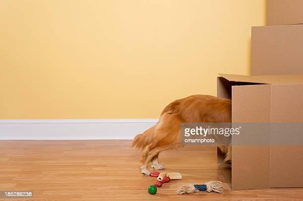 Disimballaggio cani giocattoli e ossa da scatole in movimento in casa