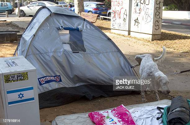 A dog urinates on a tent part of a camp which was set up in protest against high cost of living and social inequalities early morning on October 03...