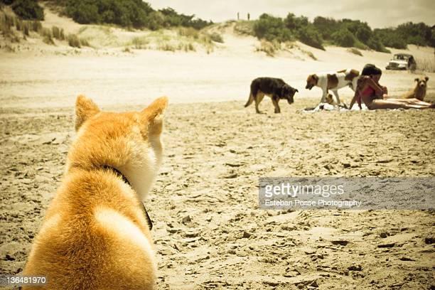 Dog view