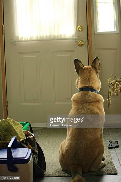 Dog waiting at door to go home