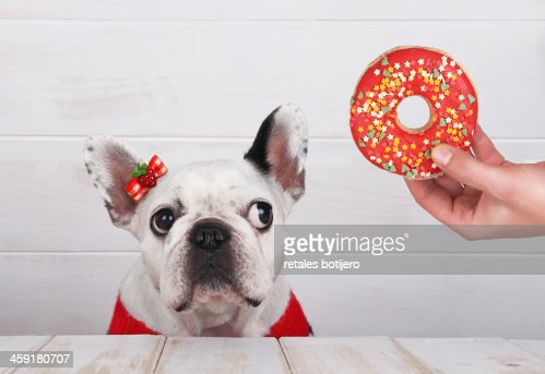 dog waiting for a Christmas donuts