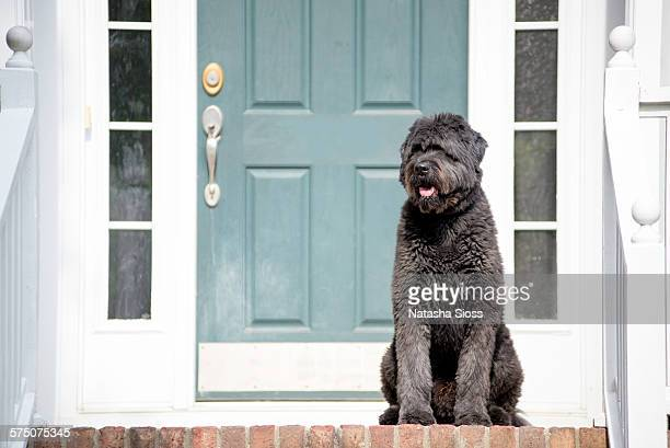 Dog waiting on the porch