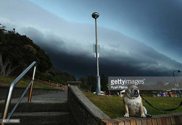 A dog waits at Bronte Beach as a severe storm hits Sydney at Bronte Beach on October 13 2014 in Sydney Australia