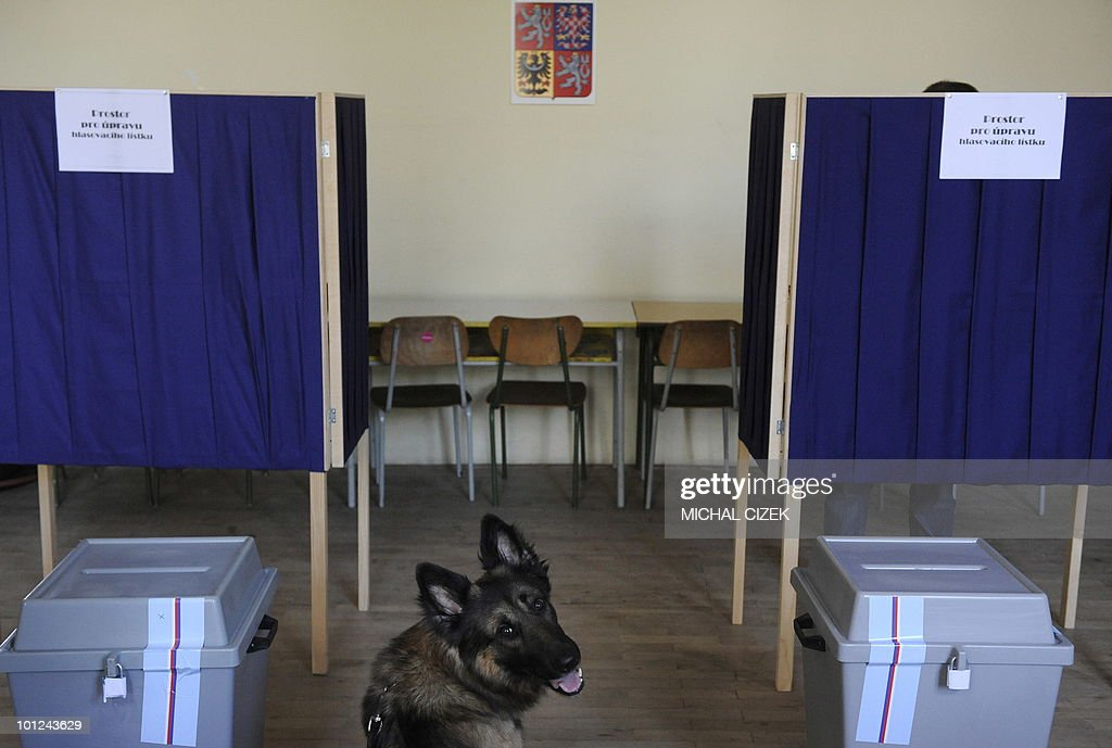 Dog waits for his owner at the polling station on May 28, 2010 in Prague during the first day of the Czech elections. Czechs started voting in a general election today to choose new leaders and bring an end to a political limbo triggered by the collapse of a centre-right coalition more than a year ago. PHOTO