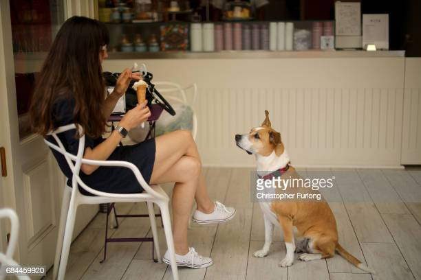 A dog waits for his portion of ice cream on the Boulevard de la Croisette during the Cannes Film Festival on May 18 2017 in Cannes France Celebrities...