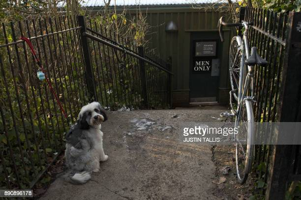 A dog waits for its owner to return from swimming at the Highgate Men's Bathing Pond in north London on December 12 at sunrise on a freezing winter...