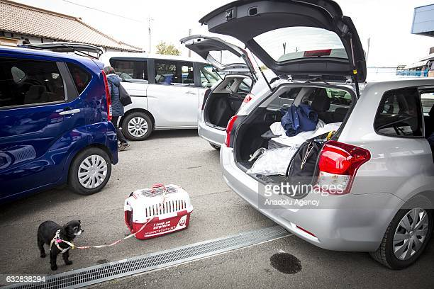 A dog waits near a rented car at the Kagoshima Airport in Kagoshima Japan on January 27 2017 Japan Airlines 'wan wan jet tour' allows owners and...