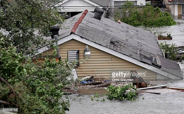 A dog waits on the side roof of a house to be rescued by workers after Hurricane Katrina tore though the area with high wind and rain on August 29...